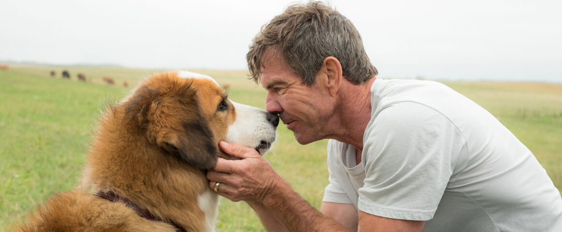 A Dog's Purpose (2017) by The Critical Movie Critics