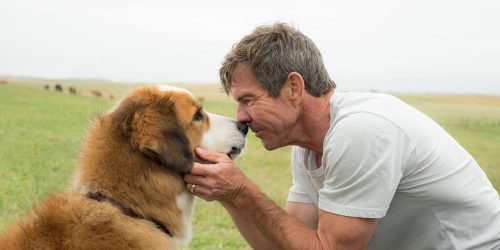Movie Review:  A Dog's Purpose (2017)