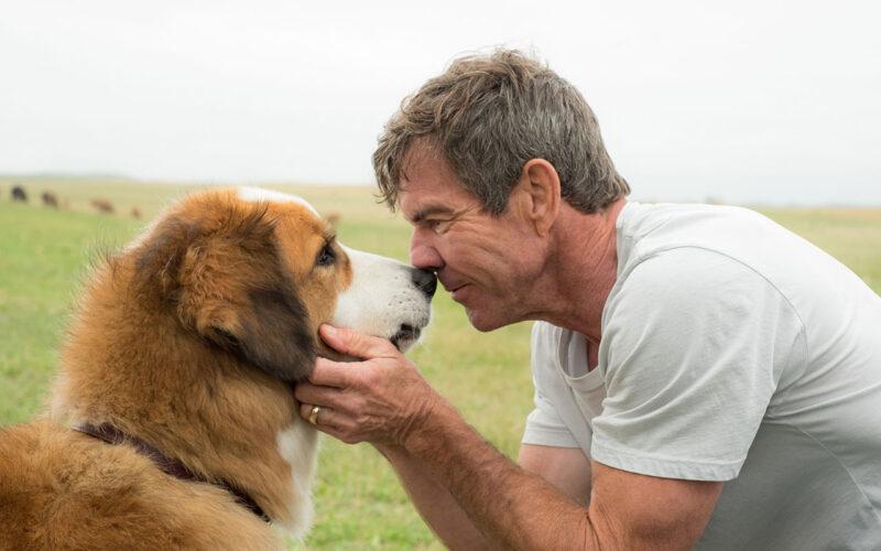 A Dog's Purpose (2017) by The Critical Movie Critics