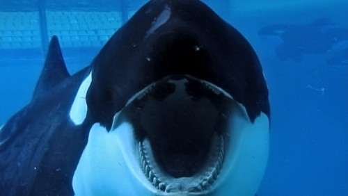 Movie Review:  Blackfish (2013)