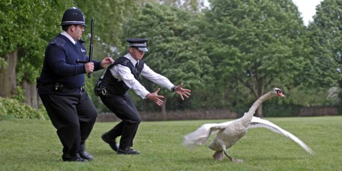Movie Review: Hot Fuzz (2007)
