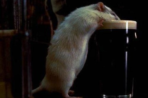 Hubert Flynn – Top 10 Movie Rodents