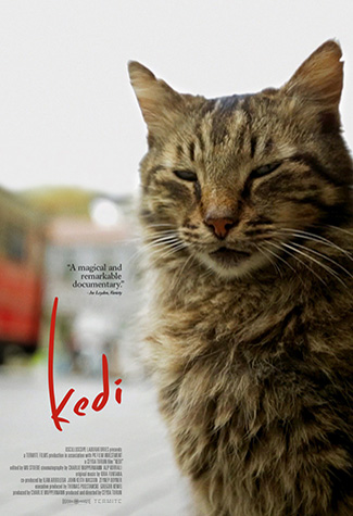 Kedi (2016) by The Critical Movie Critics
