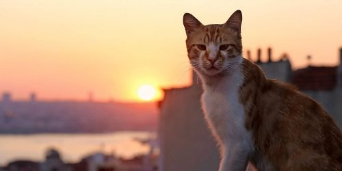 Movie Review:  Kedi (2016)