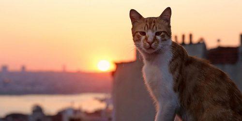 Movie Review: Kedi (2016)