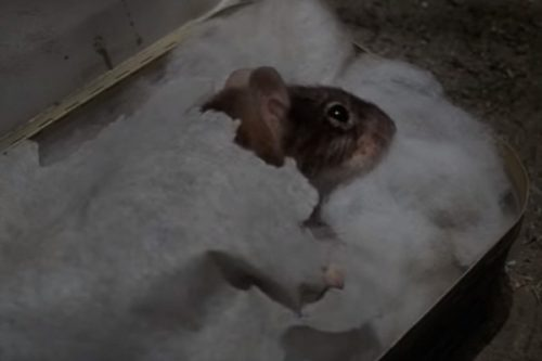 Mouse – Top 10 Movie Rodents