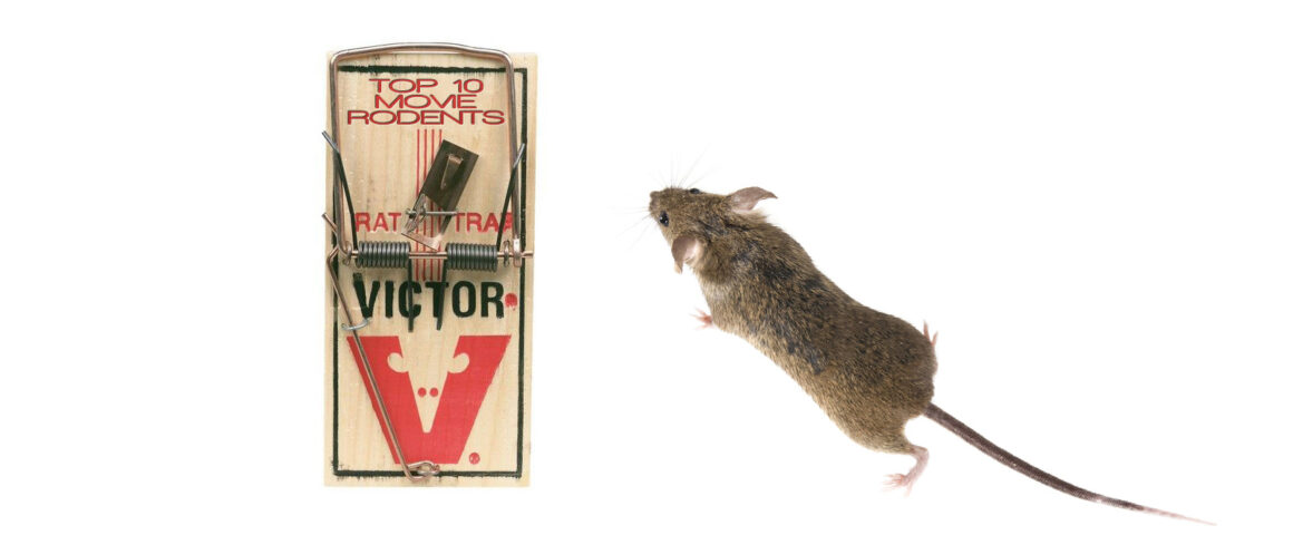 Top 10 Movie Rodents by The Critical Movie Critics